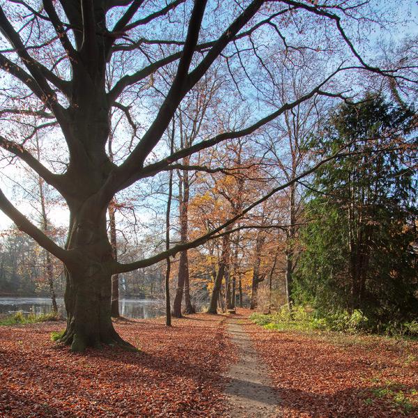 Schlosspark Ringelheim