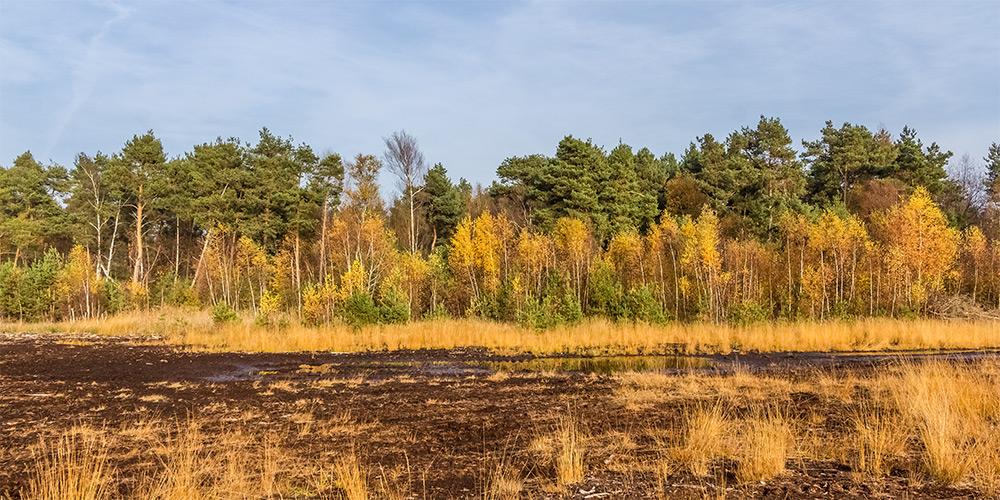 Westerbeck, Großes Moor